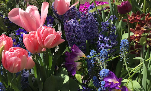 Wolfe-tulips-SmithCollege-bulb-show