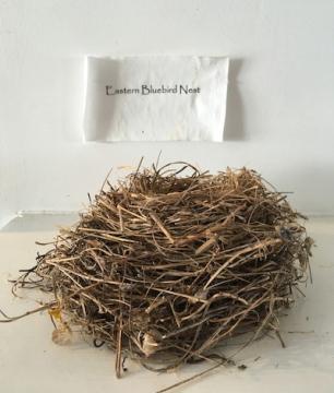 bird-nest-Wolfe.jpg
