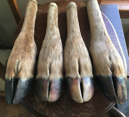 deer_feet-Wolfe-Vermont.JPG