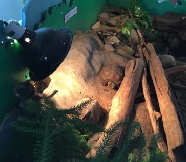 turtle-Wolfe
