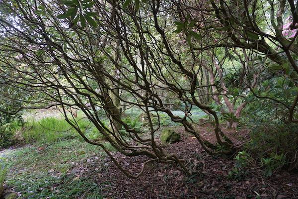 Garden-Scotland-FWolfe.JPG